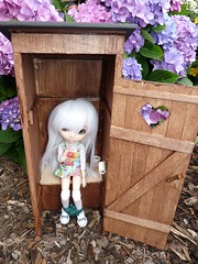 (Elesqua) Tags: hello wood kitty pullip jillian selfmade toilett obitsu