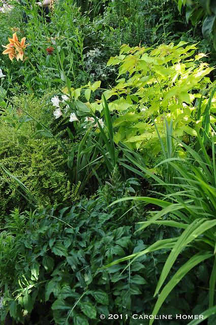 Lush garden bed