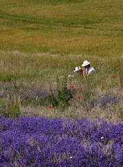 Summertime .... (Gay Biddlecombe) Tags: blue summer people sussex picnic meadow lavender