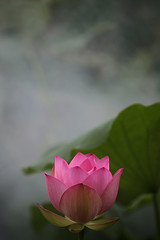 EXPLORED! Lotus Flower - IMG_0149 (Bahman Farzad) Tags: flower macro yoga peace lotus relaxing peaceful meditation therapy lotusflower lotuspetal lotuspetals lotusflowerpetals lotusflowerpetal