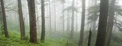 a place to lift the weight of the world (manyfires) Tags: trees panorama mist green fog forest landscape washington moody panoramic pacificnorthwest lush columbiarivergorge dogmountain