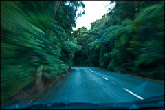 Driving on State Highway 12 in Waipoua Forest