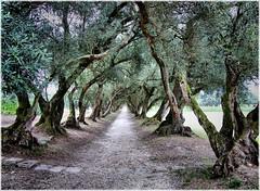 [フリー画像] 自然・風景, 樹木, 道, 201107310100