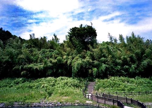 梅田川遊水池