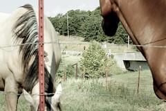 Alex Bellini - LANY - Jeep People - Two Horses and Alex (Jeep-people) Tags: freedom jeep running adventure passion sel challenge passione wrangler liberta oolagah avventura pawhuska sfida jeeppeople