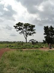 Katamarwa