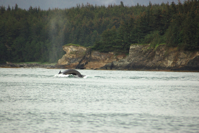 Alaska Cruise / Whale Watching