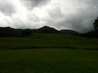 山と牛の写真