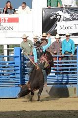 "Baker County Tourism – basecampbaker.com 2537 (TravelBakerCounty) Tags: horses oregon rural cowboy rodeo broncs ""smalltown"" basecampbaker ""bakercity"" ""easternoregon"" ""hellscanyonscenicbyway"" ""thewest"" ""bakercountytourism"" ""basecampbaker"" ""oregontrail ""bullriding"" visitbaker"