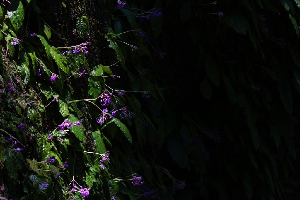 Kita Kamakura Hydrangea spot (29)