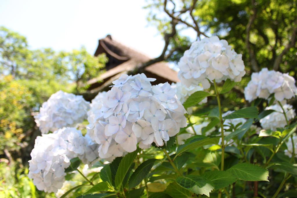 Kita Kamakura Hydrangea spot (33)