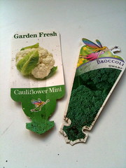 mini caulie and dwarf broccoli