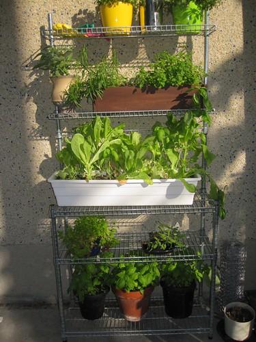 Herb Garden Summer 2011