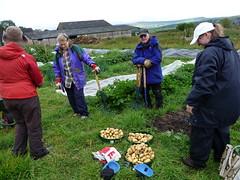 digging potatoes 4 (Diane Sims) Tags: food localfood yorkshirewildlifetrust growingnewsome newsomeward stirleyfarm stirleycommunityfarm
