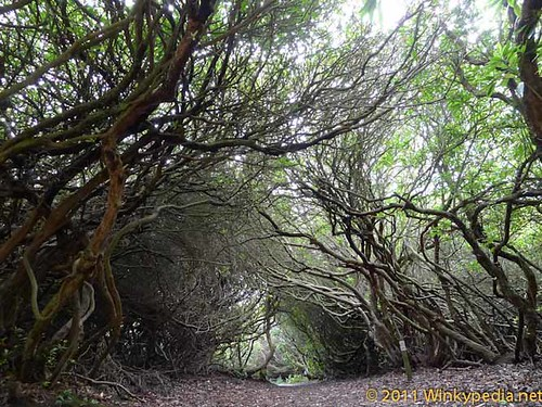 Enchanting wood in Sheringham