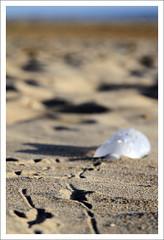 Une bouteille a la mer... (b-z-hasch) Tags: mer beach bottle sable pollution bouteille dechet environement garbagepatch