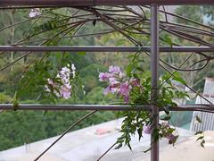 view from Tea Garden Holiday Inn