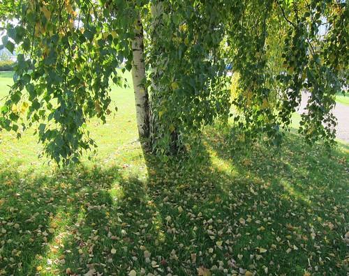 Lehtiä puun alla by Anna Amnell