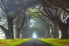 Myst - Point Reyes National Seashore, California (PatrickSmithPhotography) Tags: california road county red usa mist art halloween nature grass fog mystery landscape marin spooky lane cypress myst brances photocontesttnc11