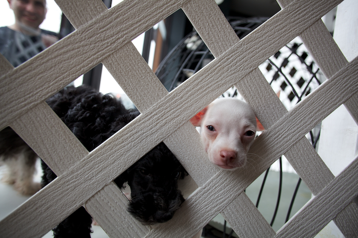 5916902410 5c8fb61ef6 o peeping pups