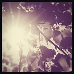 Vintage Polaroid leaves-and-sun