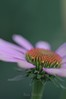71-Kyoto botanical gardn-6.25 (HATA TAKESHI) Tags: japan botanical kyoto pentax takeshi hata gardn gmofreeworld organicandgmo