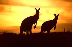 Экология. Австралия