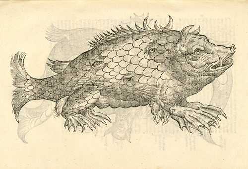 16th century woodcut of sea monster by Aldronvandi