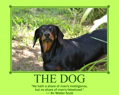 dog chien pet poster fdsflickrtoys motivator hound canine dachshund perro hund wienerdog dackel teckel k9 jimmydean doxie sausagedog aplaceforportraits pointyfaceddog