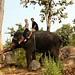 Passeio com a elefante Boonma