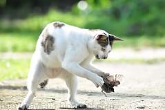 hello kitty.. (mat nayie) Tags: portrait cat jump nikon catch d90