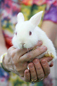 Baby white rabbit at the Bunny House