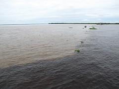 Encontro das guas (Jorgepcn) Tags: manaus amazonas rionegro riosolimes