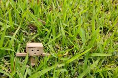 6. Break Away (Jen! Young) Tags: grass japan toy free running run day6 breakaway danbo revoltech 100themechallenge danboard