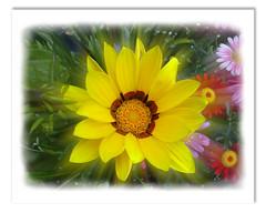 Yellow Garden Flower (Neil@photos dot com) Tags: flower art digital garden photo picture neil digitalimage beevers
