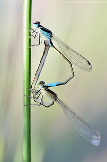 Insect Love
