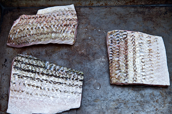 Striped bass fillets