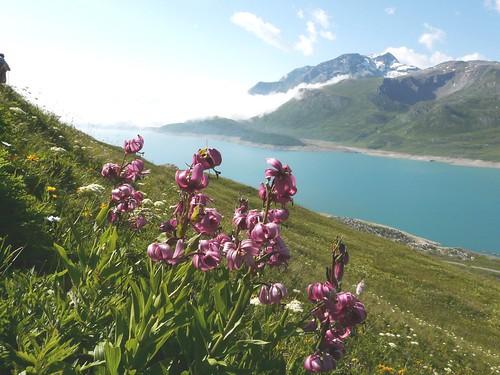Lis martagon=Lilium martagon - Mt Cenis 003