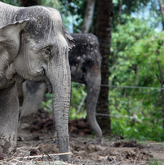 森林裡的非法活動使象群因人類的存在而感到威脅。圖片節錄自: Rhett A. Butler / mongabay報導。