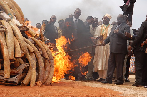His Excellency President Mwai Kibaki and dignitaries igniting the ivory bonfire