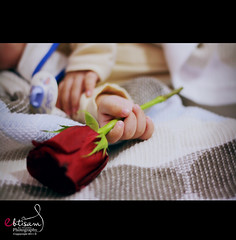 (Ebtisam AlOtaibi) Tags: red baby flower rose canon photography rebel xs 2011 ebtisam