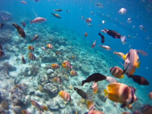 Varios peces