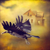 (Laura Galley) Tags: sky signs bird strange clouds flying surreal textures story abandonedhouse crow thewizardofoz floatinghouse artistictreasurechest magicunicornverybest magicunicornmasterpiece lauragalley sbfmasterpiece sbfgrandmaster