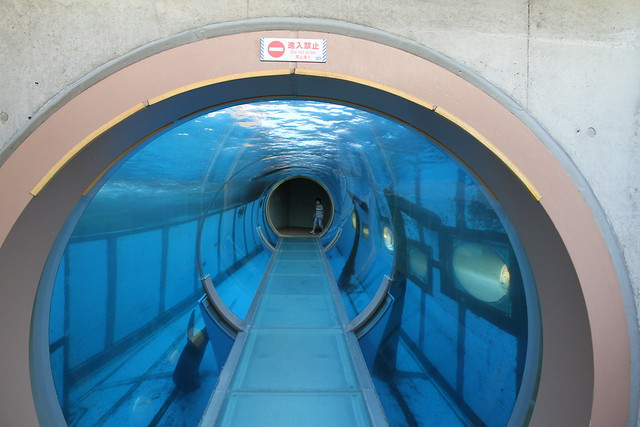 Sea Lion Tunnel