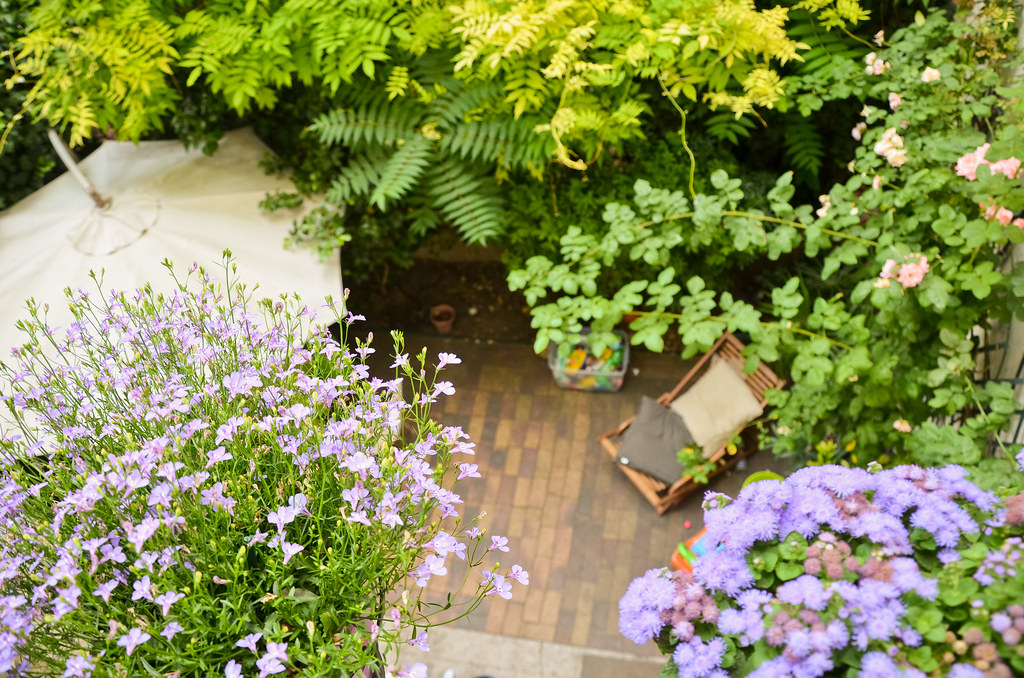 Jolie vue sur jardin