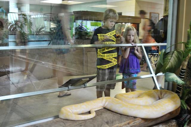 big, fat snake