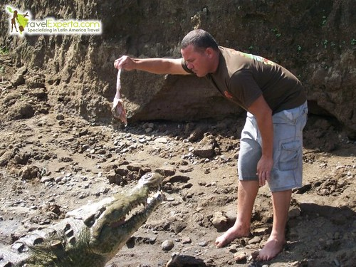 Tour Guide Teasing American Crocodiles