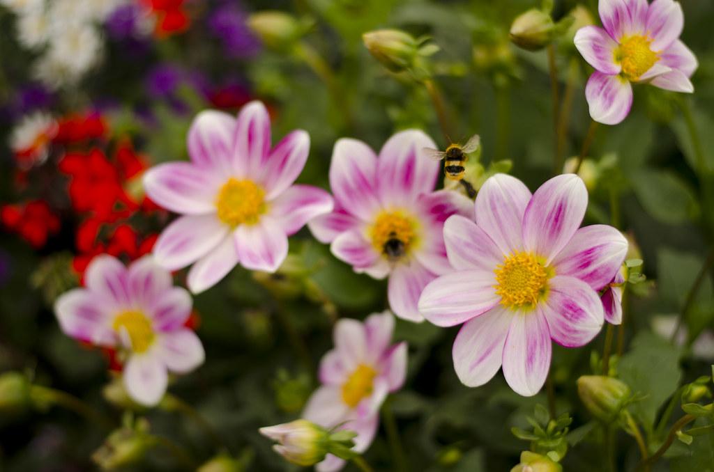 Flowers - Gardens of Versailles