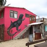 """Pink Iguana <a style=""""margin-left:10px; font-size:0.8em;"""" href=""""http://www.flickr.com/photos/14315427@N00/5981497335/"""" target=""""_blank"""">@flickr</a>"""