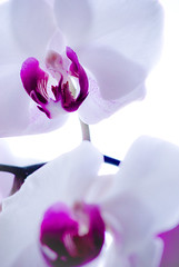 Orchidaceae (Marcel_Adrian) Tags: life pink flowers summer sky white plant orchid flower color detail macro tree love nature beauty grass leaves canon photography spring nikon colorful blossom live sommer sony violet orchidaceae lovely alpha orchidee makro a100 frhling lightroom hypertronic